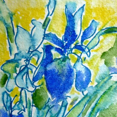 Watercolour sketch of iris. © Flora Doehler, 2015
