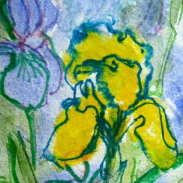 Watercolour sketch of iris. © Flora Doehler, 2015