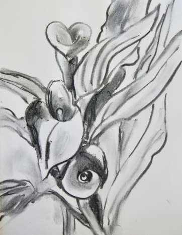 Charcoal sketch of Calla Lilies.