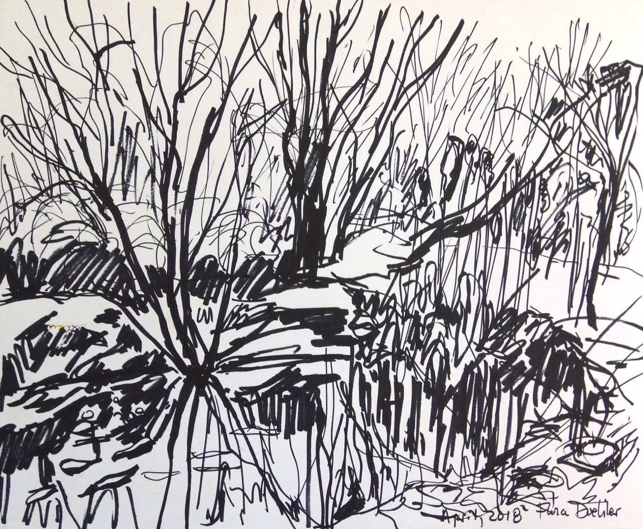Sketching with Black Marker at the Pond